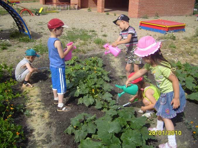 Какие растения можно сажать на территории детского сада 1